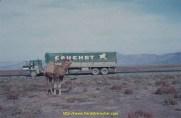 L'inévitable photo souvenir des chameaux sur la route de l'Iran