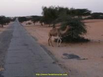 """et tout partout encore des """"chameaux """" comme ils disent"""