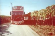 Ici à Brindisi, dans les vignes je charge du raisin pour Grenoble. Ce F12 camion remorque, est un 6 roues et il marche trés bien sachant que c'est un 400 éco.