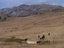 Encore quelques kms de grimpette, mais là encore pas déçu. Pour commencer, des chevaux.