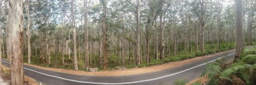 A forest in W. Australia