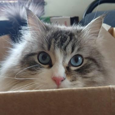 mew box