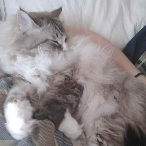 cuddle floof