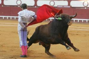 Matador y toro en plena faena