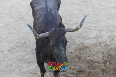 2018-08-04-FIESTAS-DE-ESTELLA-CALLE-MAYOR-COMUNICACION-Y-PUBLICIDAD--6091