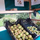 Moesappelen Goudrenet en Conference peren. Weer heerlijk fruit voor in de kinderen hun schooltas