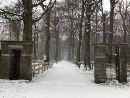Mooie plaatjes in Het Staelduinse Bos — bij Het Staelduinse Bos.