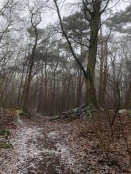 Mijn favoriete boom in Het Staelduinse Bos en nee dat is nog geen bloesem maar rijp op de grond — bij Het Staelduinse Bos.