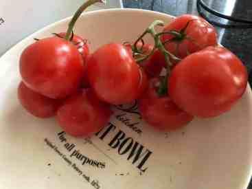 Lekker voor de soep: tomaten gered van de prullenbak op de Huishoudbeurs — bij Fietsen voor m'n eten.