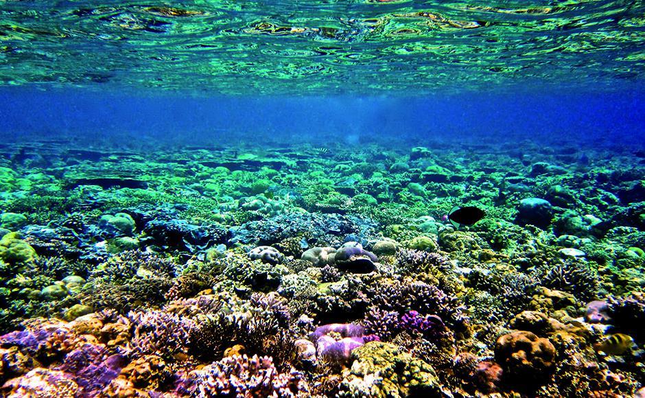 Skin protect, Ocean Respect, la démarche éco responsable d'Avène   corail