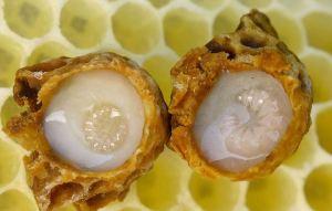 Βασιλικός πολτός: Ένα διατροφικό θαύμα της φύσης