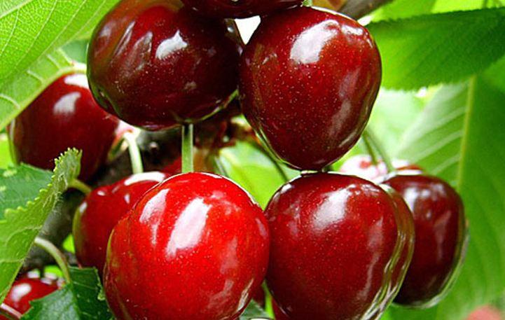 Read more about the article Το φρούτο που θα σε βοηθήσει να χάσεις το λίπος από την κοιλιά!