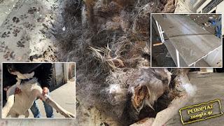 Κολαστήριο ζώων στο Περιστέρι