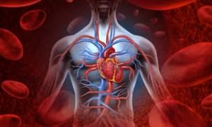 Αγγειίτιδα: Τα «αθώα» συμπτώματα από σοβαρό πρόβλημα στα αγγεία – Ποια είναι η θεραπεία