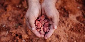 Κουκιά, συμβουλές φύτευσης και καλλιέργειας