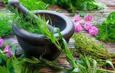 Read more about the article Γυναικολογικές παθήσεις και τα βότανα του Ιπποκράτη