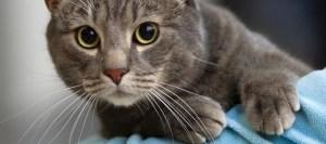 Γιατί η αγαπημένη σας γάτα γρατσουνάει τα έπιπλα