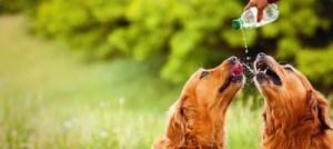 Τι είναι ωφέλιμο να πίνει ο σκύλος μας, εκτός από νερό;