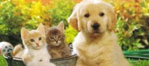 Ποιο κατοικίδιο ταιριάζει στα ζώδια;