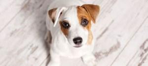 Με ποιον τρόπο ζητάνε συγγνώμη τα σκυλάκια μας