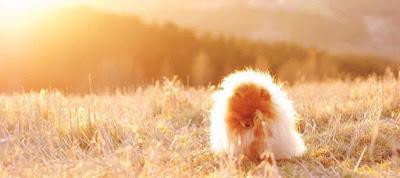 Γιατί τα σκυλιά χρειάζονται ήλιο