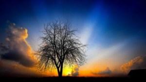 Οι τέσσερις αρετές της ψυχής