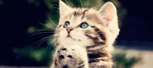 Γάτα: Ενδείξεις κακής υγείας