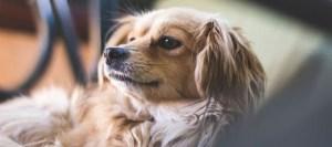 Read more about the article Πώς να κάνεις τον σκύλο σου ευτυχισμένο ακόμα κι όταν λείπεις από το σπίτι