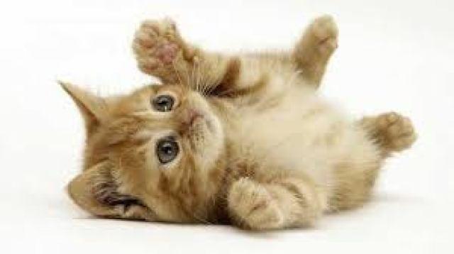 """Η γάτα σας δεν είναι """"προβληματική""""."""