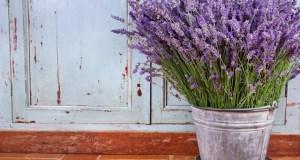7 εντομοπωθητικά φυτά που σας προστατεύουν από τα κουνούπια
