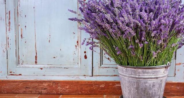Read more about the article 7 εντομοπωθητικά φυτά που σας προστατεύουν από τα κουνούπια