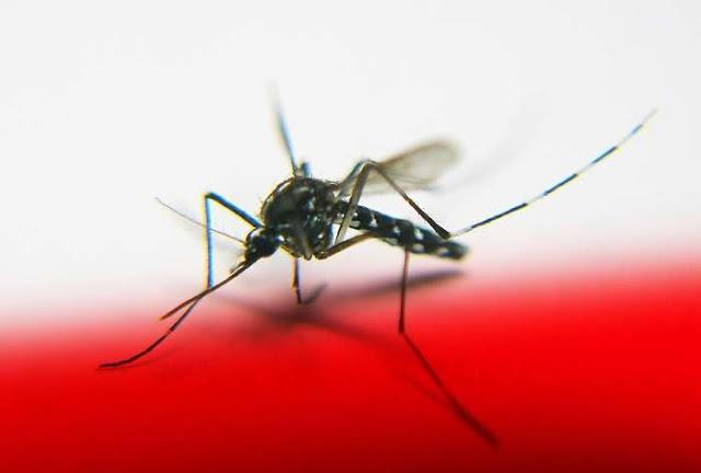 Κρατήστε μακριά τα κουνούπια με φυσικούς τρόπους