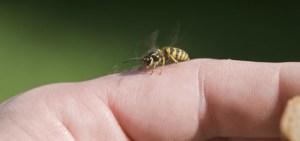 Αλλεργία σε τσιμπήματα εντόμων