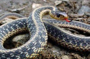 Read more about the article Τι να κάνουμε ώστε να μην πλησιάζουν φίδια στο χώρο μας
