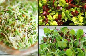 Φύτρα: μια ζωντανή υπέρ-τροφή ξεχασμένη