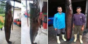Ψάρι «θηρίο» 84 κιλών έβγαλαν σε λίμνη στην Κοζάνη