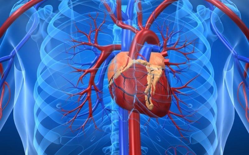 Οι τροφές που «καθαρίζουν» τις αρτηρίες – Διατροφή για την καρδιά
