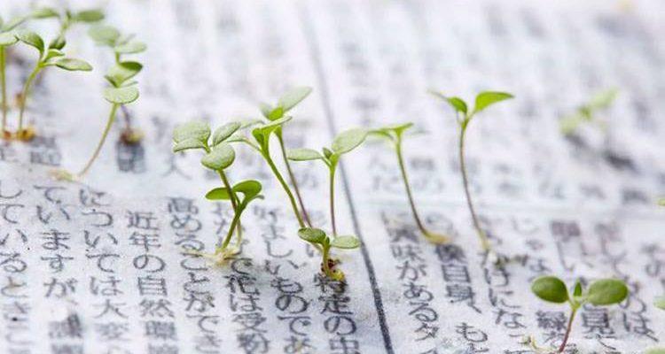 Ιάπωνες δημιούργησαν βιώσιμη εφημερίδα που μετατρέπεται σε φυτό