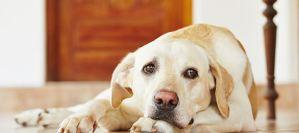 5 Πράγματα που δεν πρέπει να κάνετε μπροστά στον σκύλο σας