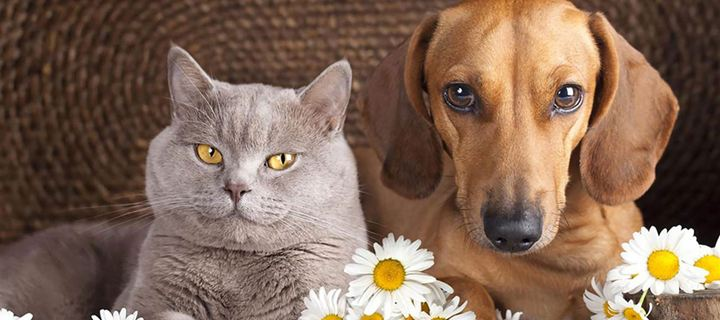 Το κάπνισμα βλάπτει την υγεία του σκύλου ή της γάτας μας;