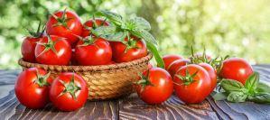 Ντομάτες κατά του καρκίνου του προστάτη