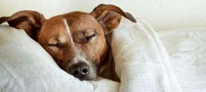 Πως θα καταλάβετε ότι ο σκύλος σας κρυώνει;