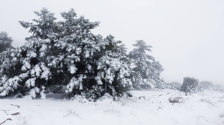 Καιρός: Χριστούγεννα στα λευκά με ψυχρή εισβολή – Xιόνια με τσουχτερό κρύο και στην Αττική