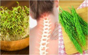 7 φαρμακευτικά φυτά που βελτιώνουν την υγεία των οστών σας