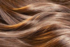 Βότανα για τα μαλλιά