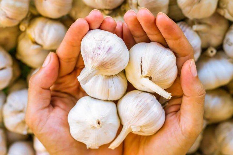 Διάλυμα με σκόρδο για να αντιμετωπίσετε τη μυκητίαση του τριχωτού της κεφαλής