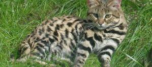 Read more about the article Πώς θα προλάβετε μία επίθεση από γάτα