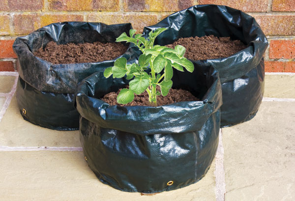 Πώς και πότε φυτεύουμε πατάτες σε κήπο και μπαλκόνι