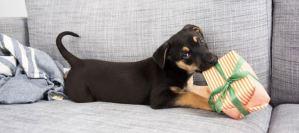 Συμβουλές για ένα σπίτι φιλικό για το σκύλο