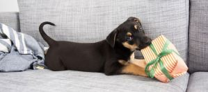 Read more about the article Συμβουλές για ένα σπίτι φιλικό για το σκύλο